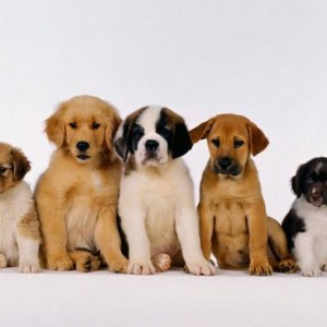 Puppy Class - Socialize Play and Learn