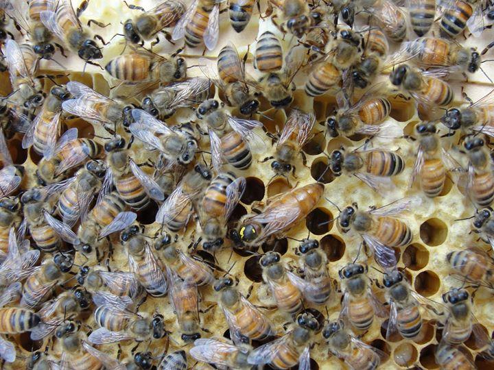 Getting Started in Beekeeping
