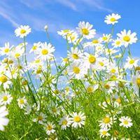 Aprofundamento Espiritual para Lderes - Mdulo 9 (Conscincia e Liberdade)