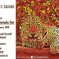 Jhalana Leopard Photography Tour by Jungle Life Safari