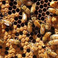 Basics of Beekeeping