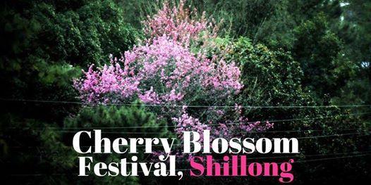 Cherry Blossom Festival - 2018