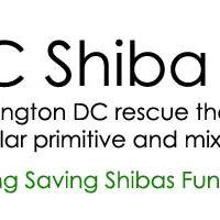 Ashburn - Adoption Event - DC Shiba Inu Rescue