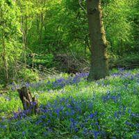 Bunny Wood Open Day