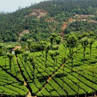 Date with Nature Ooty and Coonoor