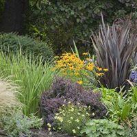 Ornamental Grasses for the Landscape