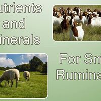 Nutrients and Minerals for Small Ruminants