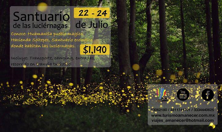 Santuario de las luciernagas tlaxcala at nanacamilpa Espectaculo de luciernagas en tlaxcala