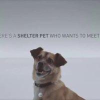 Assemblymember David Chius Pet Adoption Fair