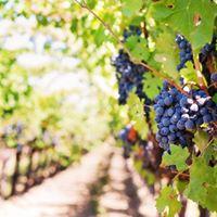 Weindegustation mit Paul Hobbs  Argentinien VS. Frankreich
