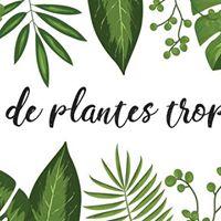 Vente de plantes Tropicales &amp Cactus