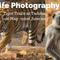 Tadoba Tiger Trails - Wildlife Photography Tours