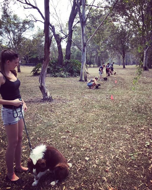 MARCH Chermside basic obedience