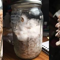 Mushroom Growing 101 Beyond Low-Tech