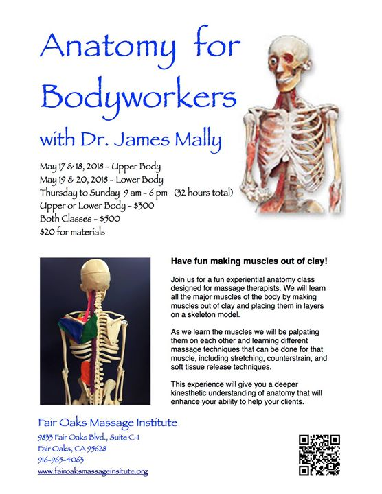 Anatomy For Bodyworkers Lower Body With Dr James Mally At Fair