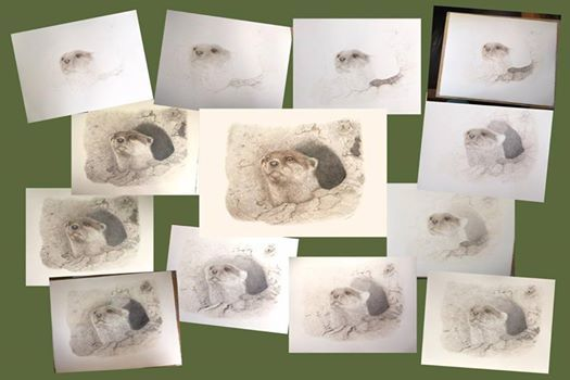 Nature in pencil - Drawing workshop