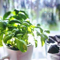 Indoor Herb Garden Workshop - Wellness Week