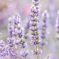 Essential Oils for you and your home - East Fremantle
