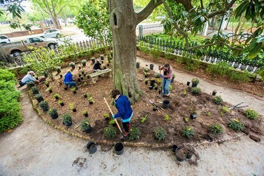 Governors Mansion Planting