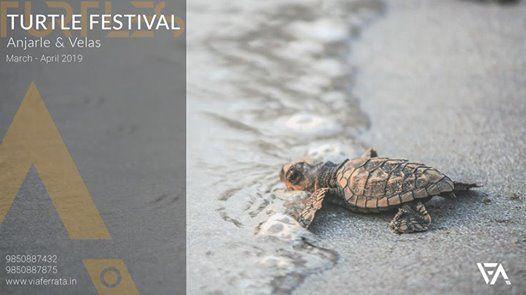 Ferrata 53 Velas Turtle Festival