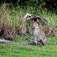 Day tour to Wilpattu National Park