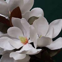 Flowersmith Workshop  Make Magnolia Grandiflora with Jen Tran
