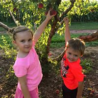 Peach Festival Hayrides Pick Your Own Peaches and More