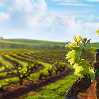 ESN McLaren Vale Wine Tour