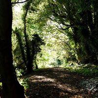 Minibeast adventure at Throne Wood Belfast