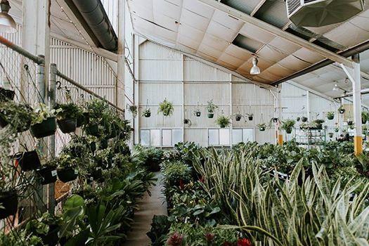 Huge Indoor Plant Warehouse Sale - Tropicana Party - Adelaide