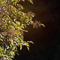 Plantae Magicae Deep Study of The Green World