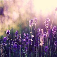 Yin &amp Aromatherapy