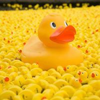 Winchester City Mill Duck Race