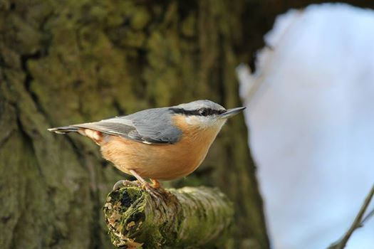 Fernbank Forest Bird Walk