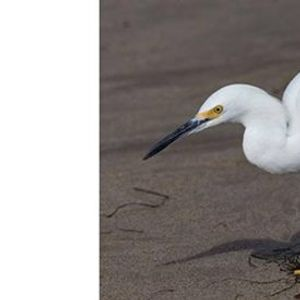 Bird Photography at Malibu Lagoon with Hartmut Walter