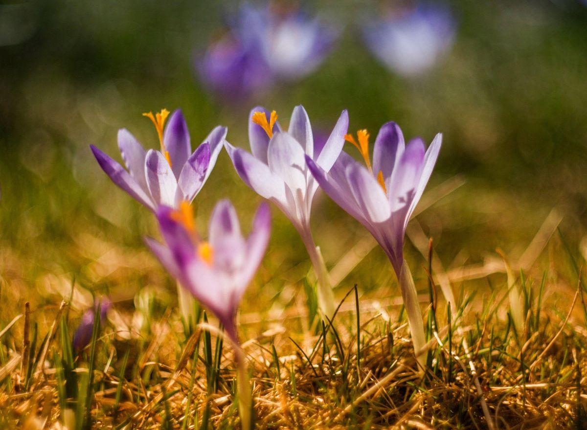 Spring Renewal a Restorative Workshop with Abby Eaton & Saraswati Clere