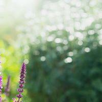 Fun with Flora Herb Gardening