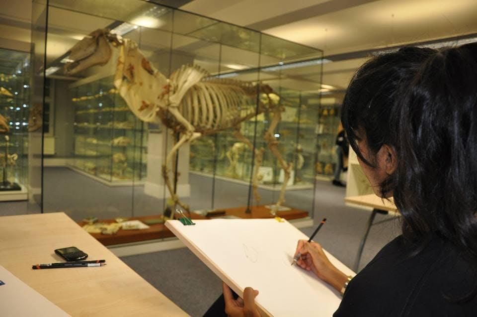 Animal Anatomy Art classes Summer term 2018