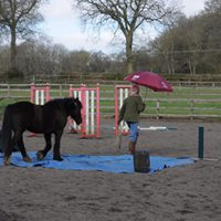 Intro to Horse Agility  Horse Agility Clinic