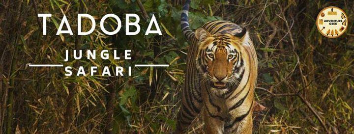 Tadoba Jungle Safari - The land of Tigers