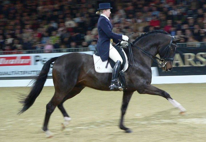 Showcase Dressage