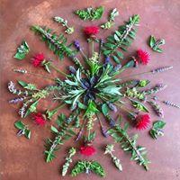 A la dcouverte des plantes sauvages comestibles
