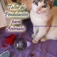 Taller de pendulacin para animales