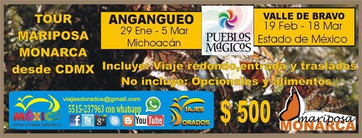 Mariposa Monarca Tour Cdmx Valle De Bravo