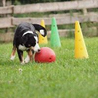 Workshop Treibball