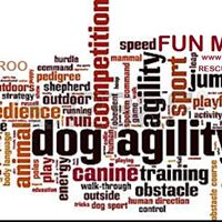 Agility Fun Match for Aussie Rescue