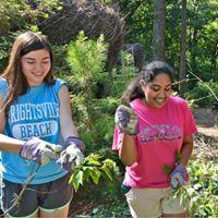 Volunteer Day in the Garden