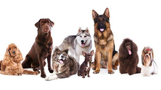Adriatico Dog Show 2019  Chions (Pn)