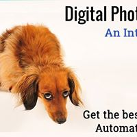 Digital Photography An Introduction - Auto Modes