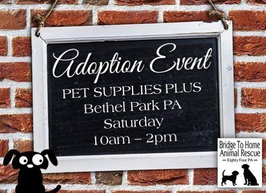 Pet Supplies Plus Adoption Event At Pet Supplies Plus Bethel Park